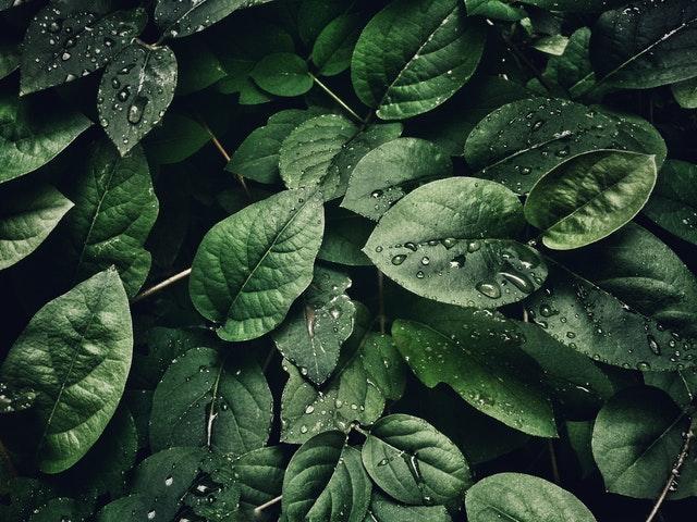 Botanische Tipps: Frieden schaffen